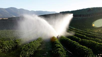 Coffee prices skyrocket as fungus kills high-end beans