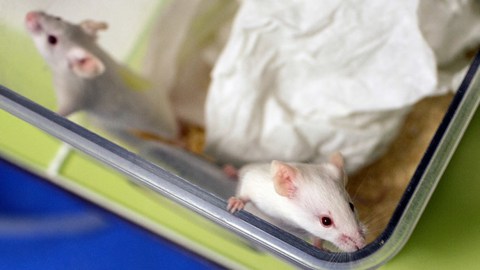 'Of Mice and Pain': Using light instead of pills a future possibility