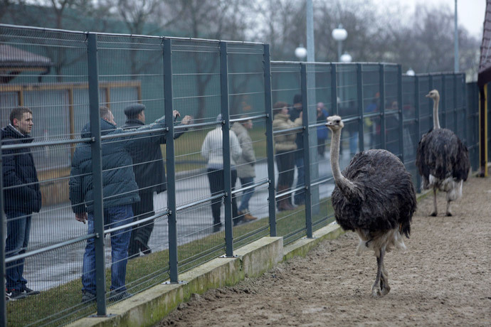 Anti-government protesters and journalists look at ostriches kept within an enclosure on the grounds of the Mezhyhirya residence (Reuters / Konstantin Chernichkin)