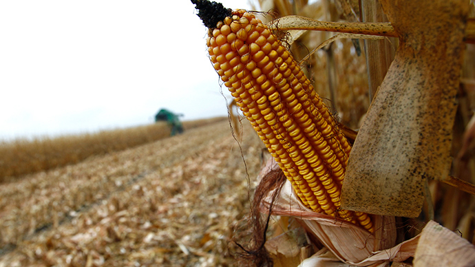 ​Koch ally to introduce Monsanto-backed bill to bar state GMO labeling laws