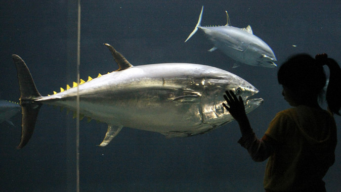 Deepwater Horizon oil spill cause fatal heart defects in tuna - study