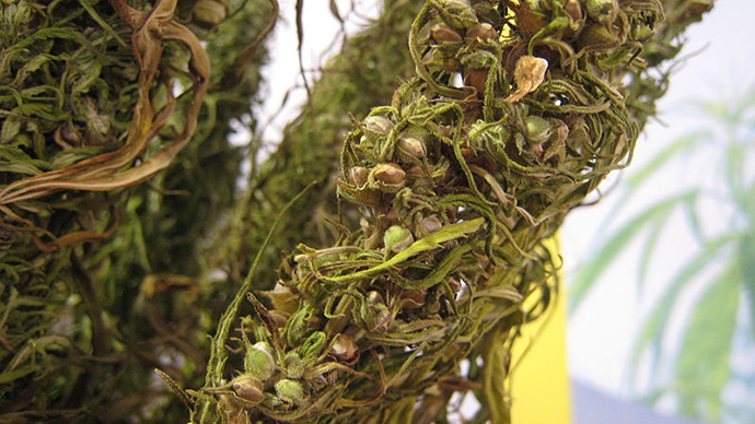 Hemp aid: US considers buying industrial cannabis from Ukraine to bolster its economy