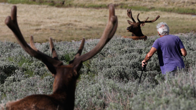 Animals fleeing Yellowstone spark fears of volcanic eruption