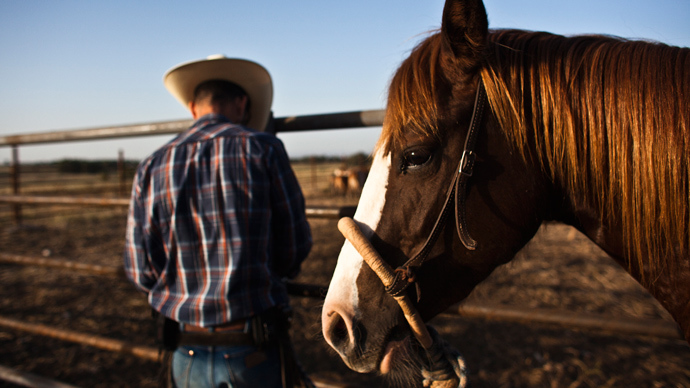 Feds start rounding up wild horses in Utah