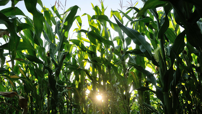 Climate change reducing nutrition in staple foods - study