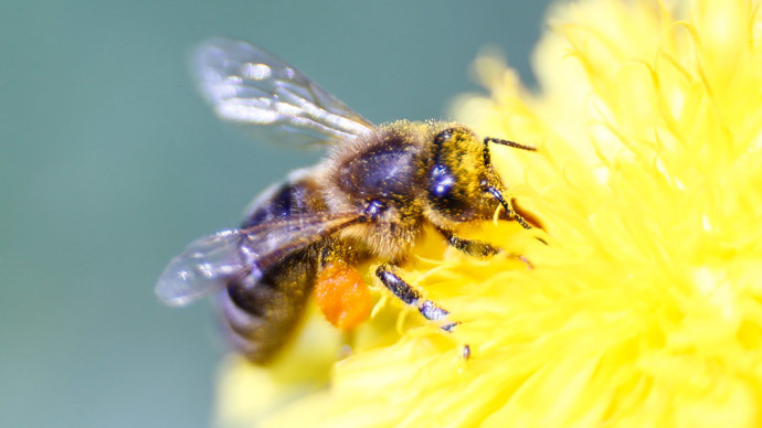 Insecticides cause honeybee colony collapse, study shows