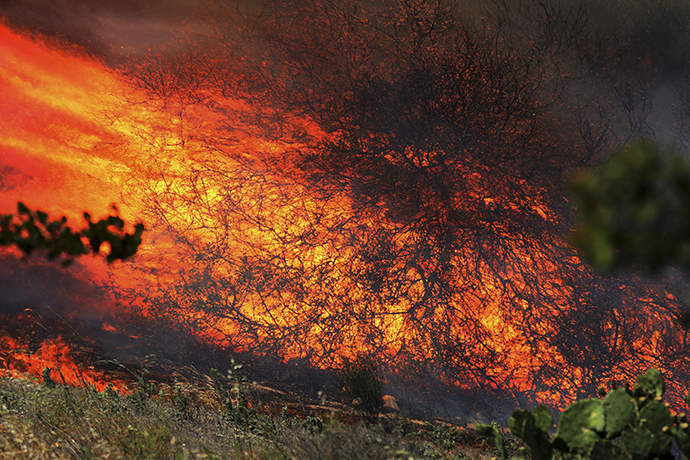 A bush is fully engulfed at the Ranch Fire near San Diego, California May 13, 2014. (Reuters / Sandy Huffaker)