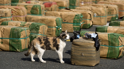 $1,000 meal for hungry cat: Russian sea food store suffers feline heist (VIDEO)