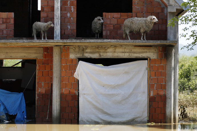 Sheep are seen on the terrace of a flooded house in Obrenovac, southwest of Belgrade, May 20, 2014. (Reuters/Marko Djurica)