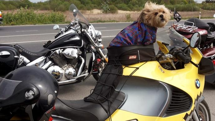 Dogged by misfortune: Famous Russian biker hound's motorbike stolen