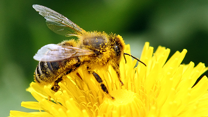 Pesticides linked to honeybee decline are affecting other species, scientists say