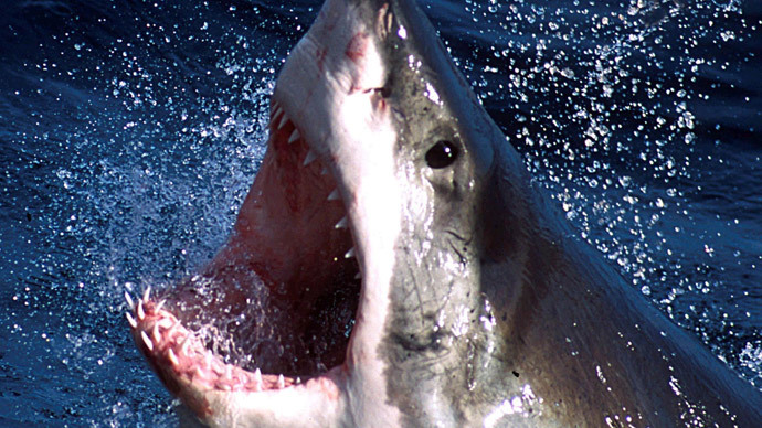 Mystery 'super predator' hunted in Australian waters after devouring 3-meter shark
