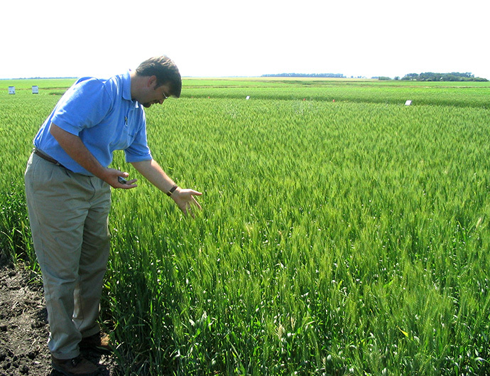 Michael Doane, Monsanto's wheat industry affairs director, looks at growth in a wheat field in an undisclosed location in North Dakota (Reuters / Carey Gillam)