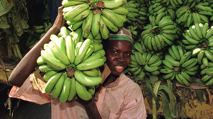 Genetically modified 'super banana' to be tested on Americans