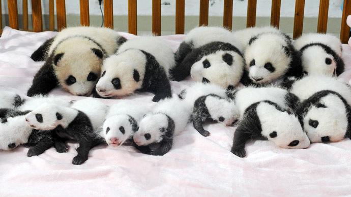 China bans baby pandas from predicting 2014 World Cup winners