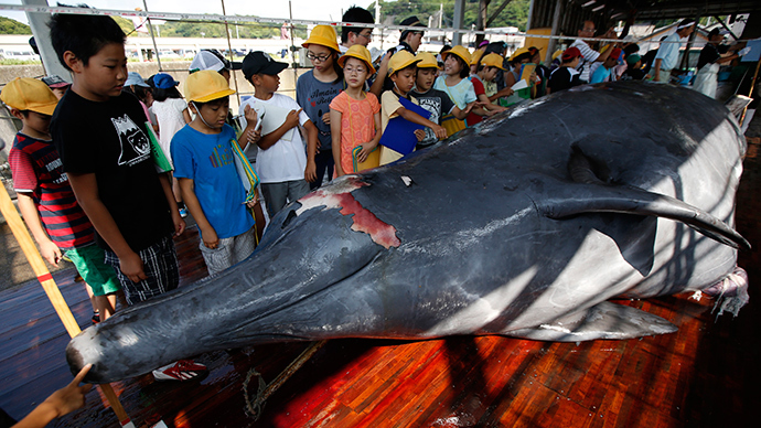 Whale carved up in Japan as crowd of kids and locals watch (PHOTOS)
