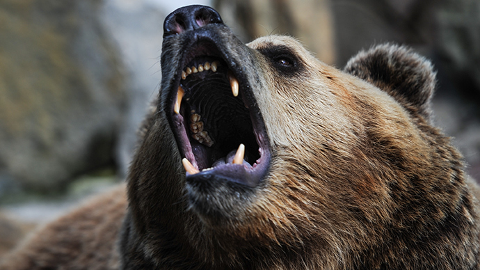 Caged bear bites off 5yo's hand in southern Russia