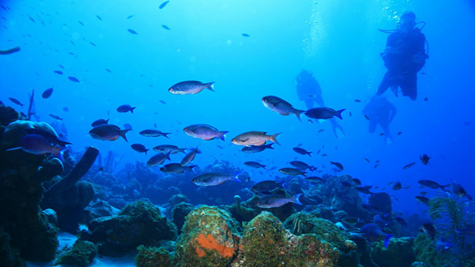 Overfishing and pollution: Caribbean coral reefs may disappear in 20 years