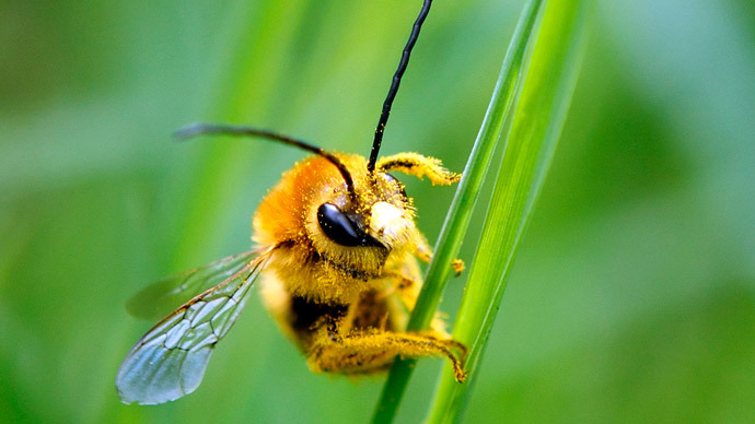Bee studies feel sting of pesticide manufacturers – MPs