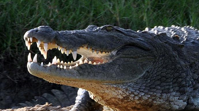 Runaway crocodile may be behind deadly Congo plane crash, UK inquest hears