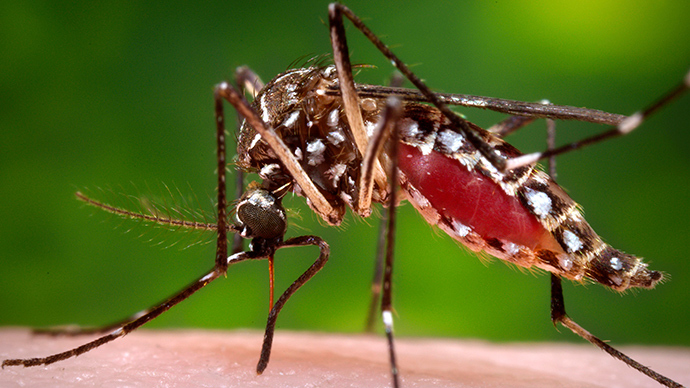 Exotic mosquito-borne virus makes US premiere, infects 2 in Florida