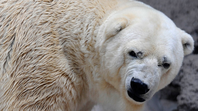 #FreeArturo: 470,000 sign petition to relocate depressed polar bear to Canada