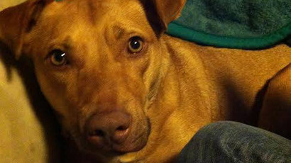 Colorado city to pay $262k settlement to owner of dog killed by cop