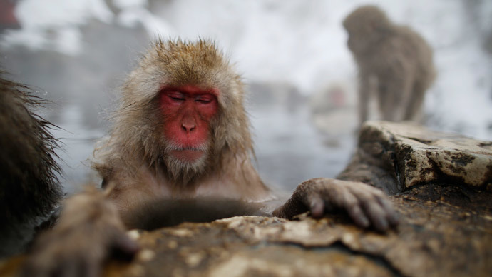 Abnormalities in Japanese monkeys linked to Fukushima nuclear disaster