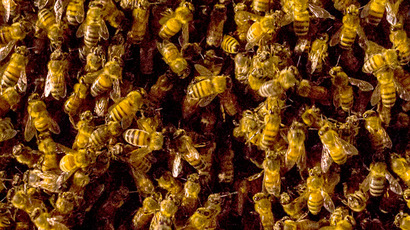 ​Canadian beekeepers' sting: Pesticide giants sued for $450mn over bee deaths