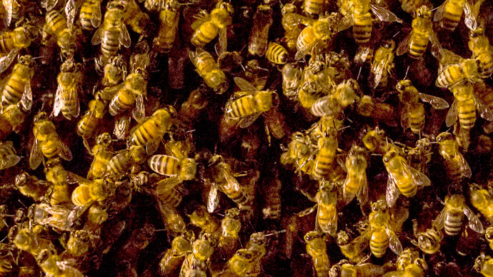 Dying man crashes into house, releasing 60,000 raging bees