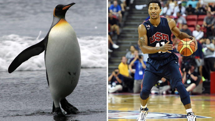 The Big Klekowskii: Yes, ancient penguins were the size of basketball players