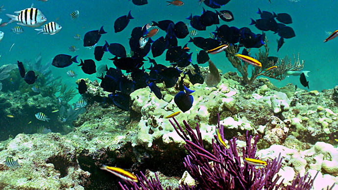 Google 'street view' maps coral reefs off Florida