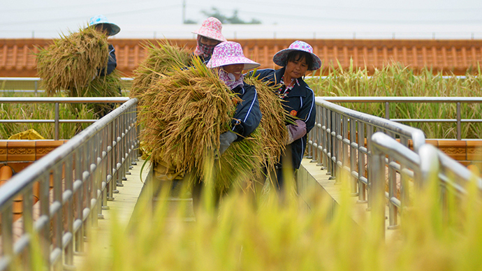 End of the line: GMO production in China halted