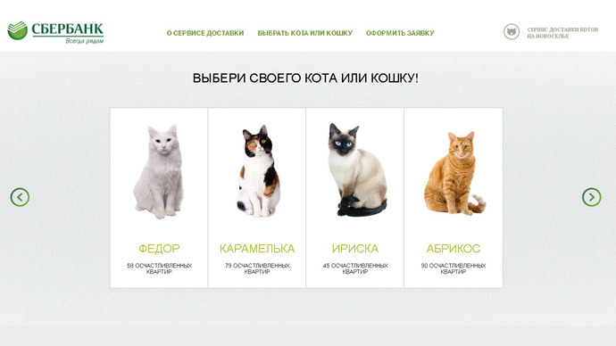 Cats selection to choose from on Sberbank's website. Screenshot from Sberbank.ru