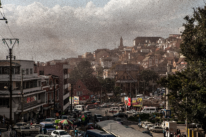 A swarm of locusts invades the center of Madagascar capital Antananarivo on August 28, 2014 (AFP Photo / Rijasolo)