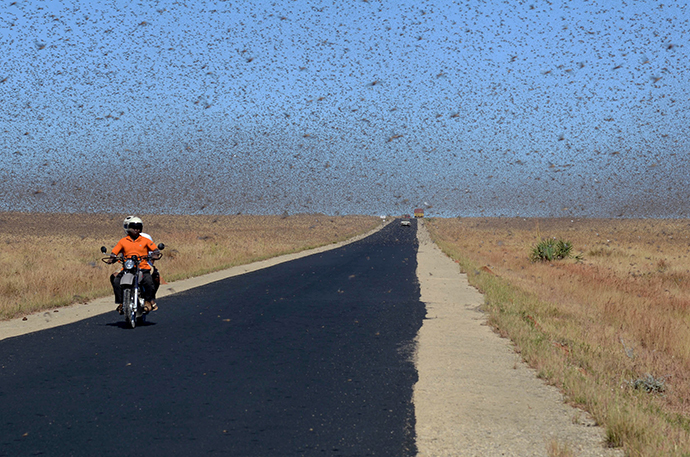 A swarm of the Red Locusts 20 kilometres north of the town of Sakaraha, south west Madagascar (AFP Photo / Bilal Tarabey)