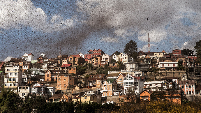 A swarm of locusts invades the center of Mdagascar capitol Antananarivo on August 28, 2014. (AFP Photo / Rijasolo)