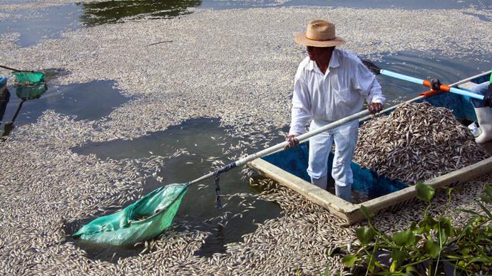 53 ton fish-kill: Dead 'popocha' fish removed from Cajititlan Lagoon, Mexico