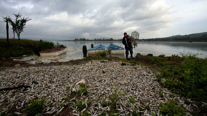 "A fisherman collects dead ""popocha"" fish at the lagoon of Cajititlan in Tlajomulco de Zuniga, Jalisco State, Mexico, on September 1, 2014.(AFP Photo / Hector Guerrero)"
