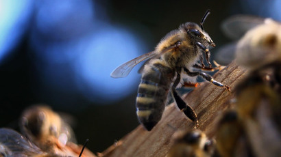 Honeybee antibiotics? Fresh honey 'key' to beating drug-resistant infections, scientists say