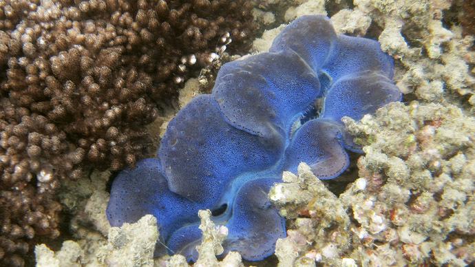 Australia to reverse plan to dump mud on Gt Barrier Reef