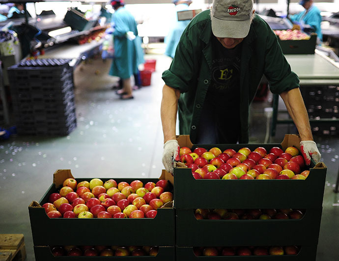 Employees sort and pack apples at RAJPOL company, near Grojec, Poland, August 4, 2014. (Reuters / Filip Klimaszewski)
