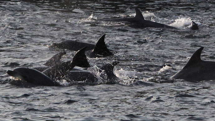 Crimean combat dolphins 'transferred to Russian military control'