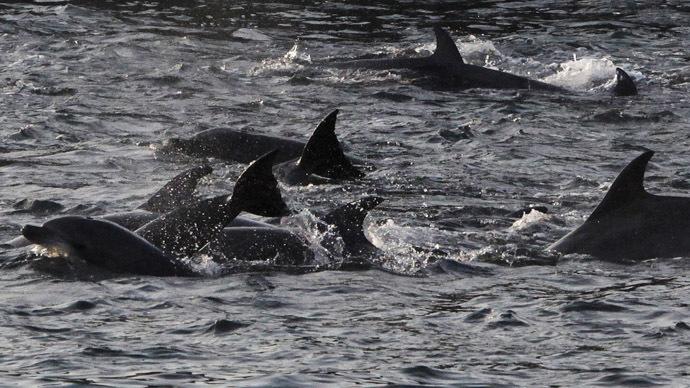 Aquatic Facebook junkees: Dolphins have complex social networks & communities