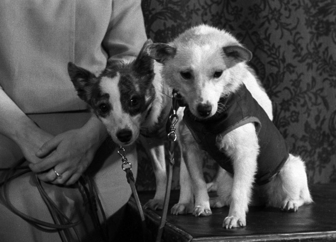 A still from the Soviet documentary Earth-Outer Space-Earth by director Tamara Lavrova. Space dogs Belka and Strelka.(RIA Novosti)