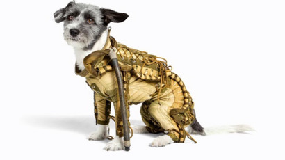 Dragon-cat and bee-dog: Russian groomers turn ordinary animals into futuristic creatures