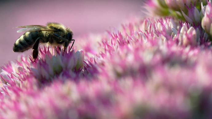 Chemical producer lobbies for increase in allowed levels of pesticide linked to 'Beemageddon'