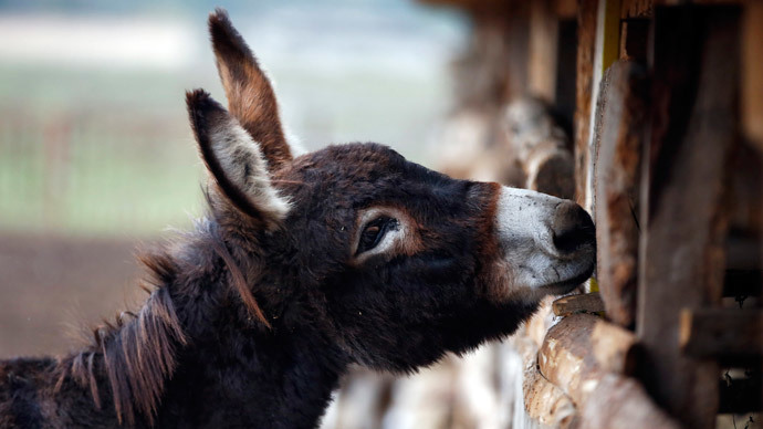 Cover your ass! Conservative attack on donkey lovemaking overturned in Poland