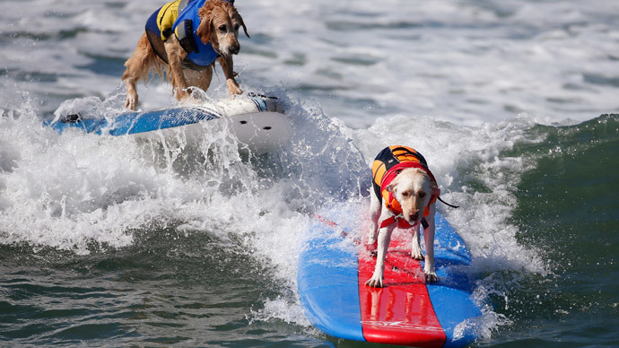 Surf's pup! Dog surfing contest drops in on California (PHOTOS)