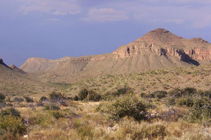 Chihuahua Desert near Sierra Blanca, Texas. (image from wikipedia.org by Ricraider)